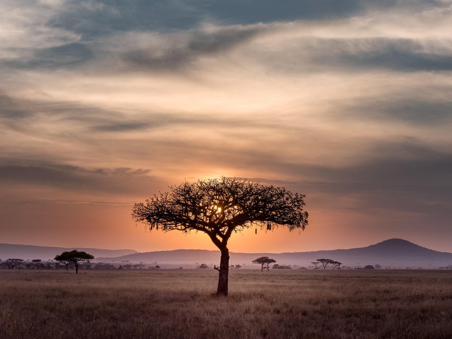 South Africa savannah view night nature